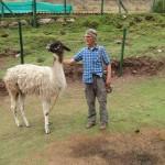 Llama and Barry