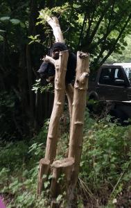 Gorilla in the undergrowth - Richard Jefferies Railway Halt