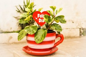Plant in teacup and saucer