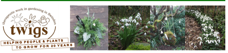Snowdrops and soup at Twigs