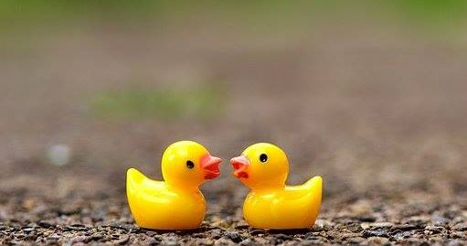Swindon's Famous Duck Race: It's Quackers!
