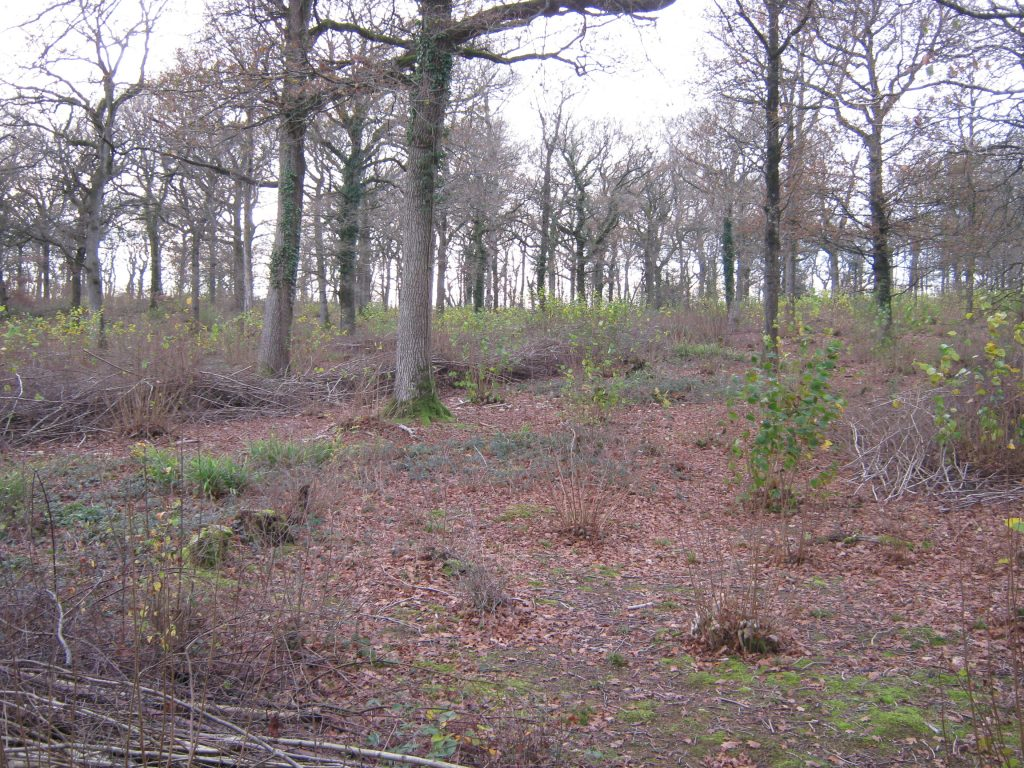 2-year-coppice