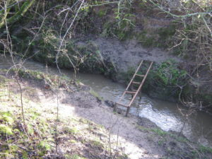 Stream with ladder type thing across it.