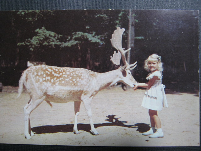 Child with fallow deer