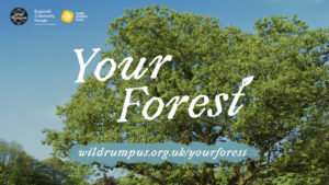 Making a Woody Wild Rumpus - your forest