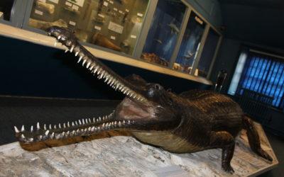 Swindon's Famous Crocodile