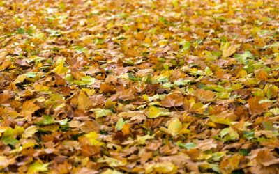 We say Autumn – you say Fall