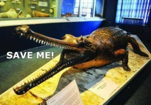 Museum and Art Gallery Latest - the swindon gharial